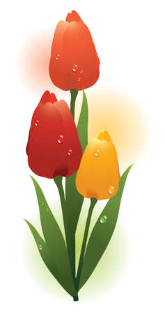 bunch of fresh colorful tulips with water drops Vector