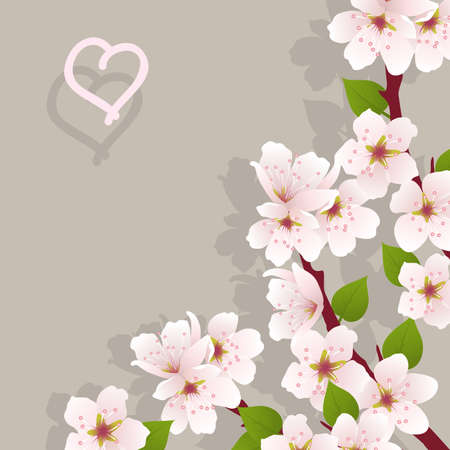 cherry branch: vector floral background with cherry flowers Illustration