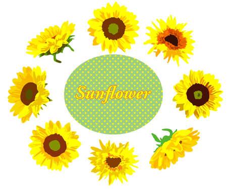 Sunflower flower decoration frame Vetores