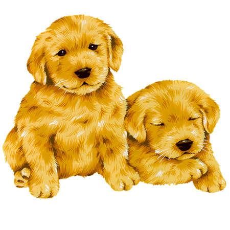 amiability: dog-3 Stock Photo