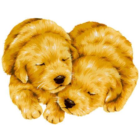 whim: dog-4