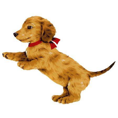 amiability: dog-9 Stock Photo