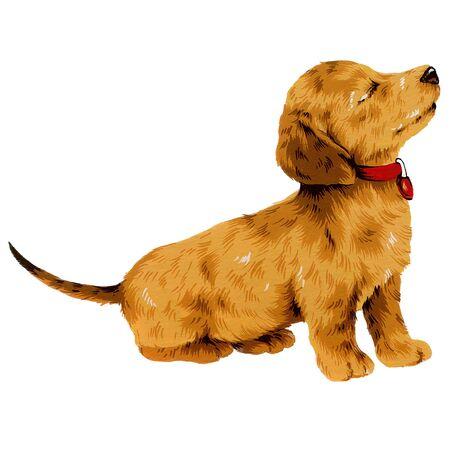 dog-10 photo