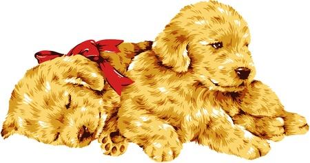 amiability: dog-1 Illustration