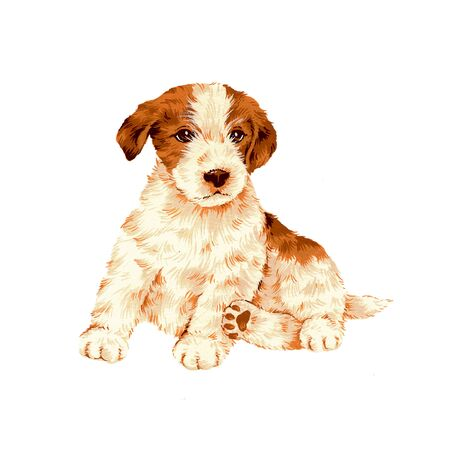 safely: dog-14 Stock Photo