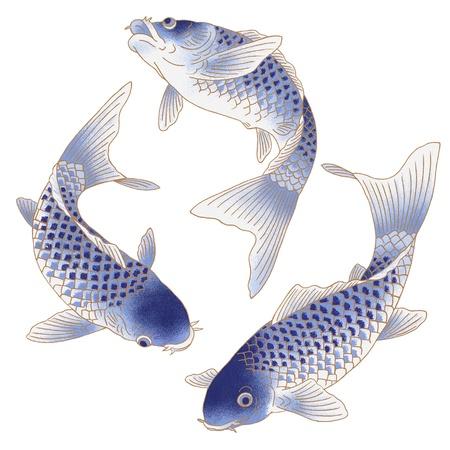 pez carpa: tres peces que nadan