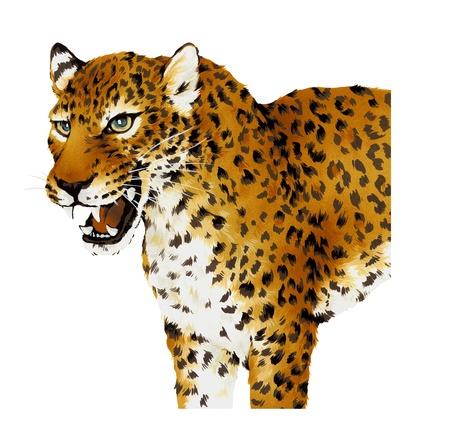 Panther Stock Photo - 17851703