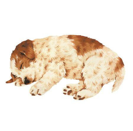 endearing: pretty dog