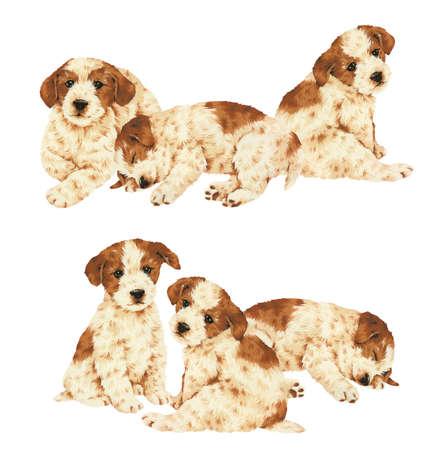 amiability: pretty dog