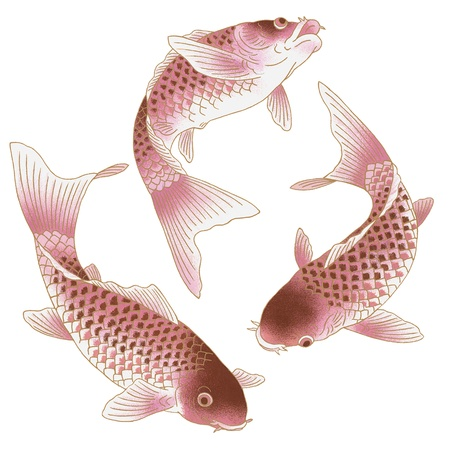Japanese carp Stock Photo - 17927286