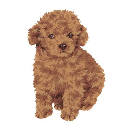 whim: pretty dog