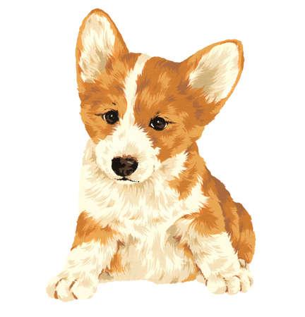 whim: A pretty dog