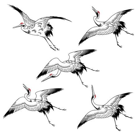 crane bird: A Japanese crane