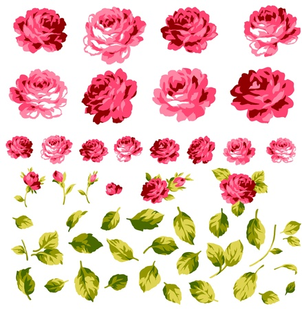 mujer con rosas: rosas colecci? Vectores