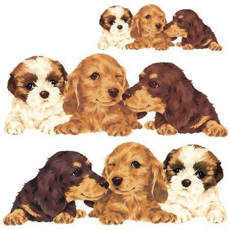 puppy Stock Photo - 20495560