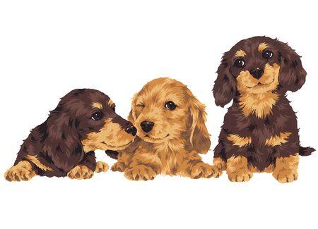 puppy Stock Photo - 20494269