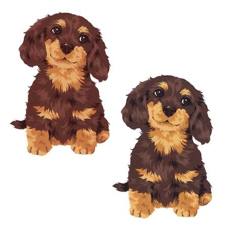 puppy Stock Photo - 20493322