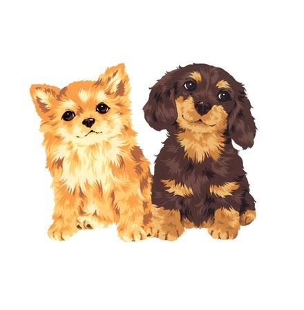 puppy Stock Photo - 20494451