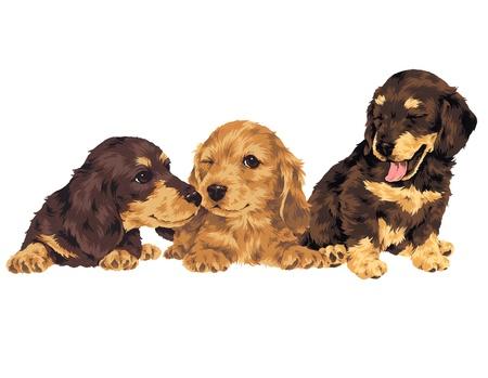 guiltless: puppy