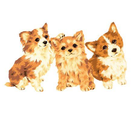 puppy Stock Photo - 20494143