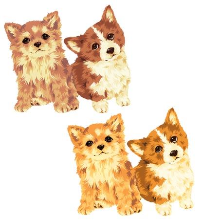 puppy Stock Photo - 20495559