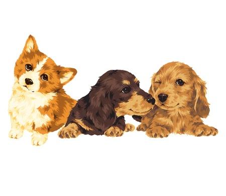 whim: puppy