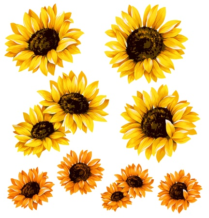 sunflowe Stock Photo - 21089998
