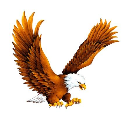 白の頭の鷲