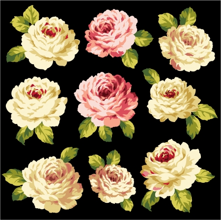 splinter: The bouquet of the rose