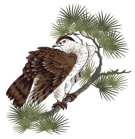 pine and hawk