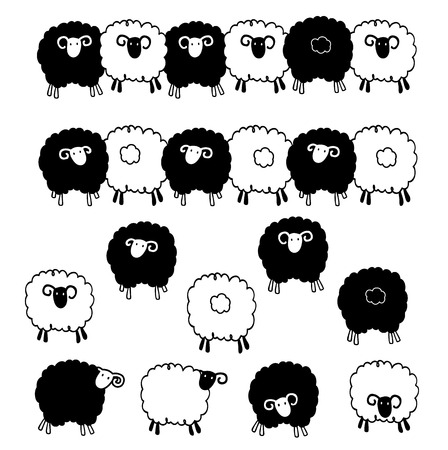 wool sheep: material of pretty sheep, Illustration