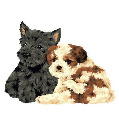 amabilidad: bonito perro