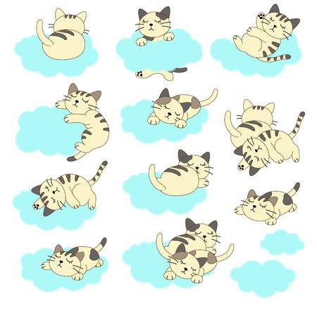 gato muy
