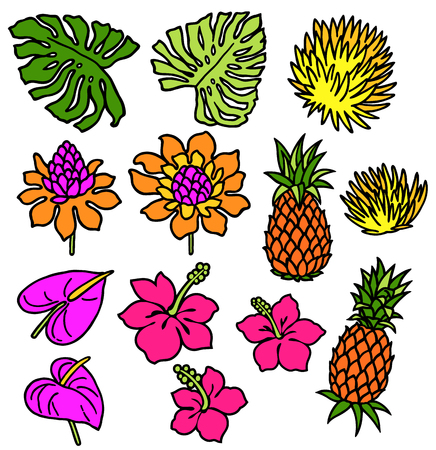 houseplant: picture of Hibiscus and pineapple Illustration