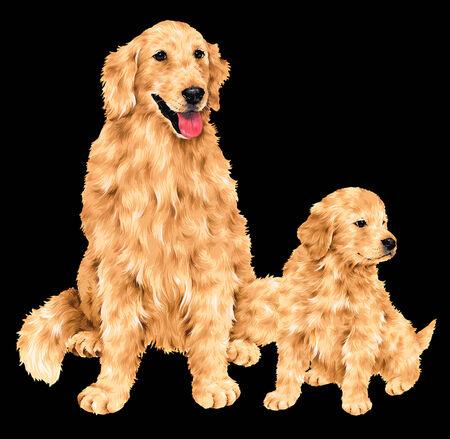 pet breeding: pretty dog