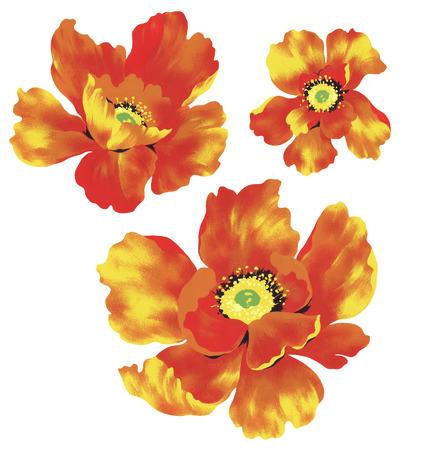 material flower: illustration of flower