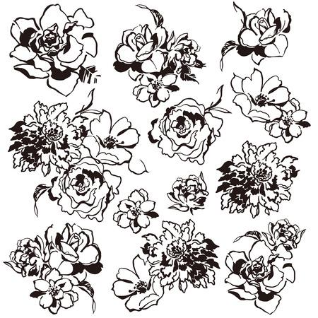 resplendent: Flower illustration Illustration
