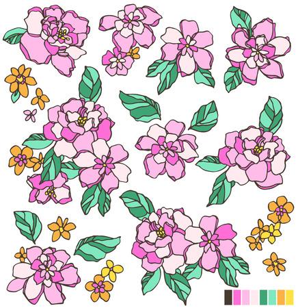 showy: Flower illustration Illustration