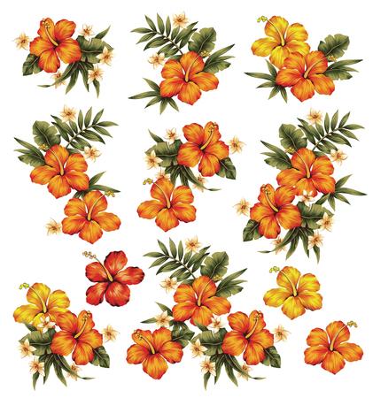 vigorous: Hibiscus flower illustration