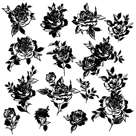 Rose flower illustration,