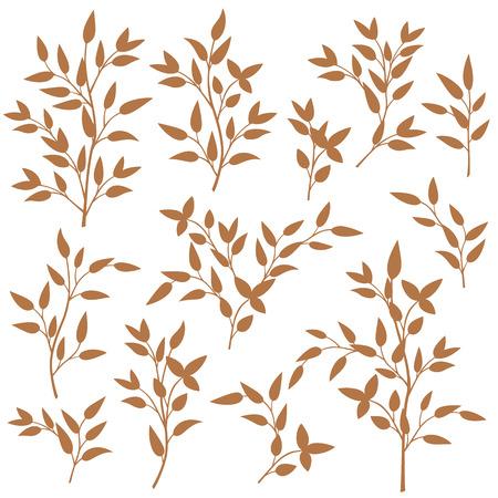 illustration: Leaf illustration