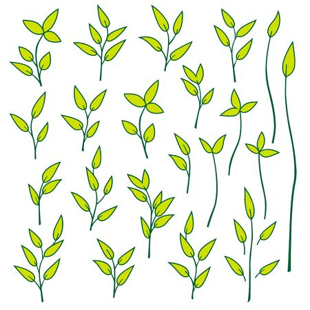 leaf illustration: Leaf illustration