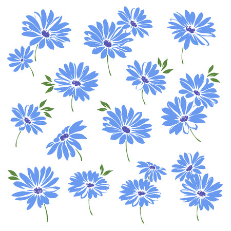 corsage: Marguerite flower illustration
