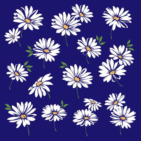Marguerite flower illustration