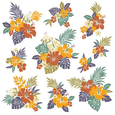 hibisco: Ilustración de la flor del hibisco
