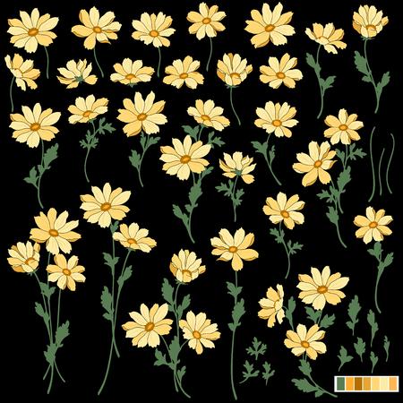 marguerite: Flower illustration object Illustration