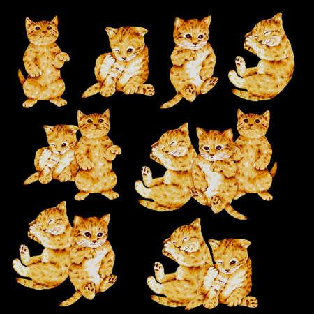 whim: Illustration of  cat