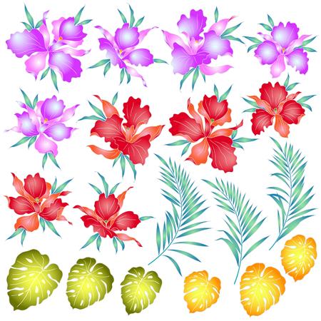 tahiti: Tropical orchid illustration
