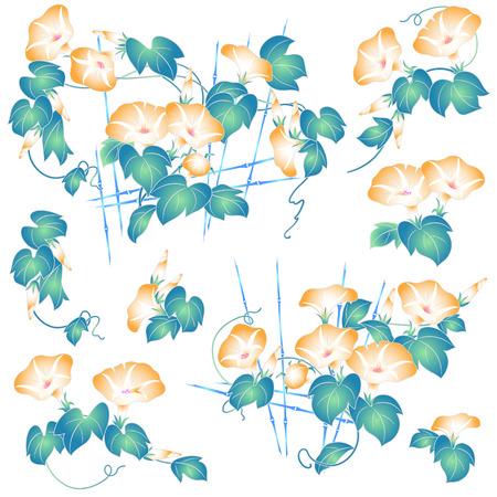 일본식 나팔꽃 일러스트