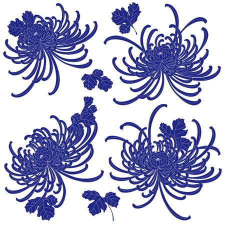 japanese chrysanthemum: Japanese style Chrysanthemum flower Illustration